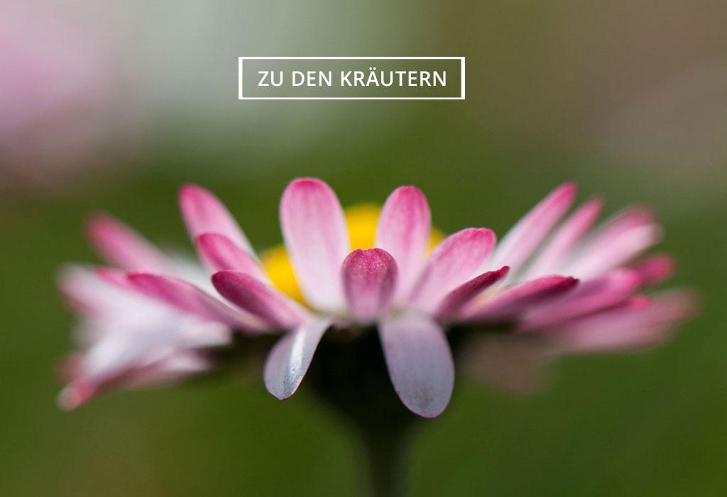 Uschis Kräuter