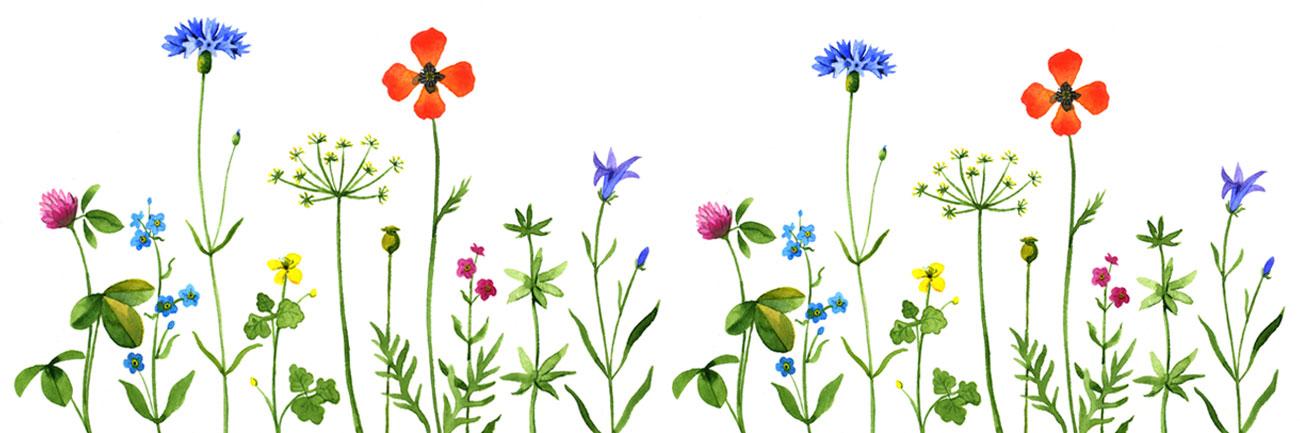 Hintergrund Wiesenblumen